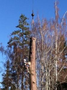 Koala Tree Care 12