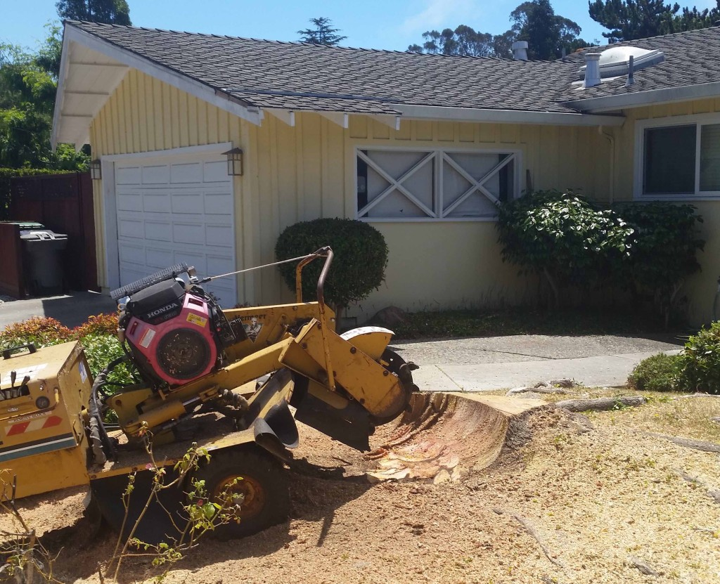 Stump Removal Koala Tree Care Santa Cruz