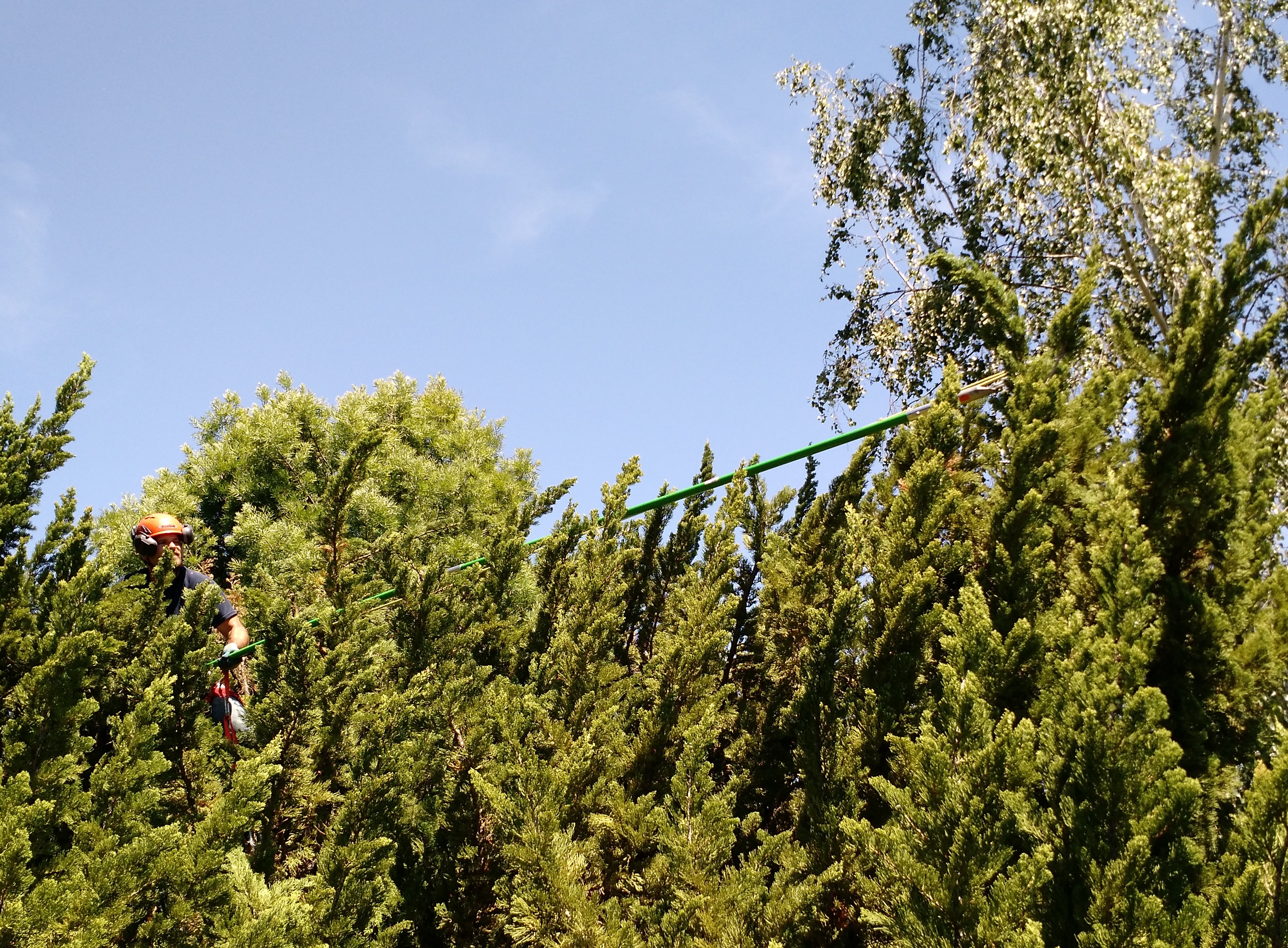 Tree Services and Tree Care